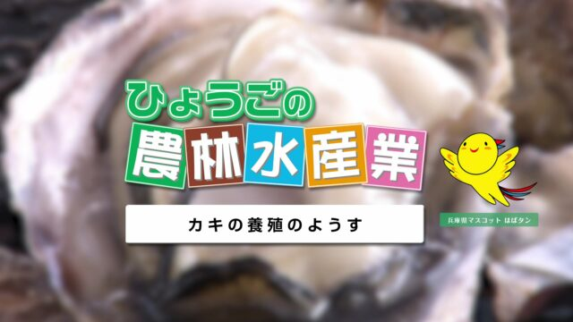 農林水産業副読本視聴覚教材 20『カキの養殖のようす』