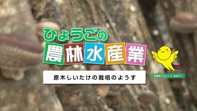 農林水産業副読本視聴覚教材 15『原木しいたけの栽培のようす』
