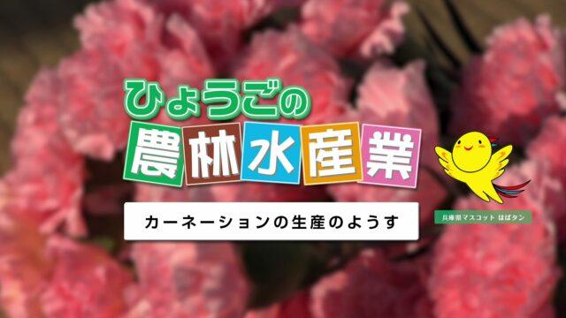 農林水産業副読本視聴覚教材 09『カーネーションの生産のようす』