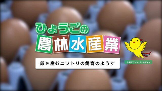 農林水産業副読本視聴覚教材 12『卵を産むニワトリの飼育のようす』