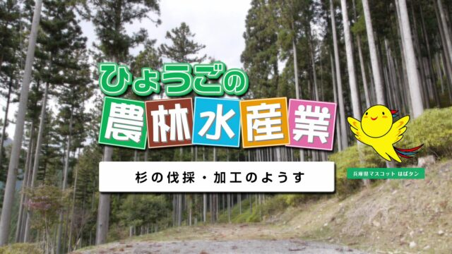 農林水産業副読本視聴覚教材 14『杉の伐採・加工のようす』