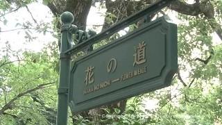 花のみち(宝塚駅~宝塚大劇場)①