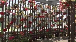 フラワーセンター(大温室内・四季の花室 熱帯植物室)