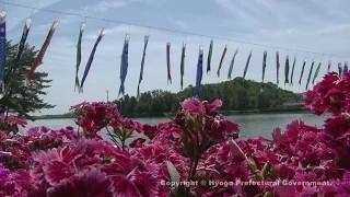 フラワーセンター(空を泳ぐ鯉のぼり)