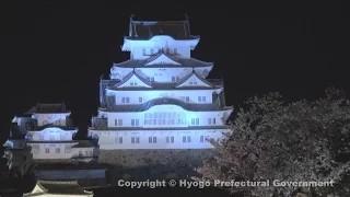 姫路城(夜桜)①