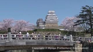 姫路城(桜)②