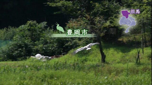 ひょうご五国 県民活動紹介映像「STORYS」 但馬:環境保全活動『コウノトリが教えてくれたこと』