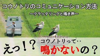 Vol.04 | 鳴けないコウノトリはどうやってコミュニケーションする?
