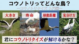 Vol.05 | |コウノトリの寿命は?どれくらい飛ぶの?コウノトリクイズ入門編
